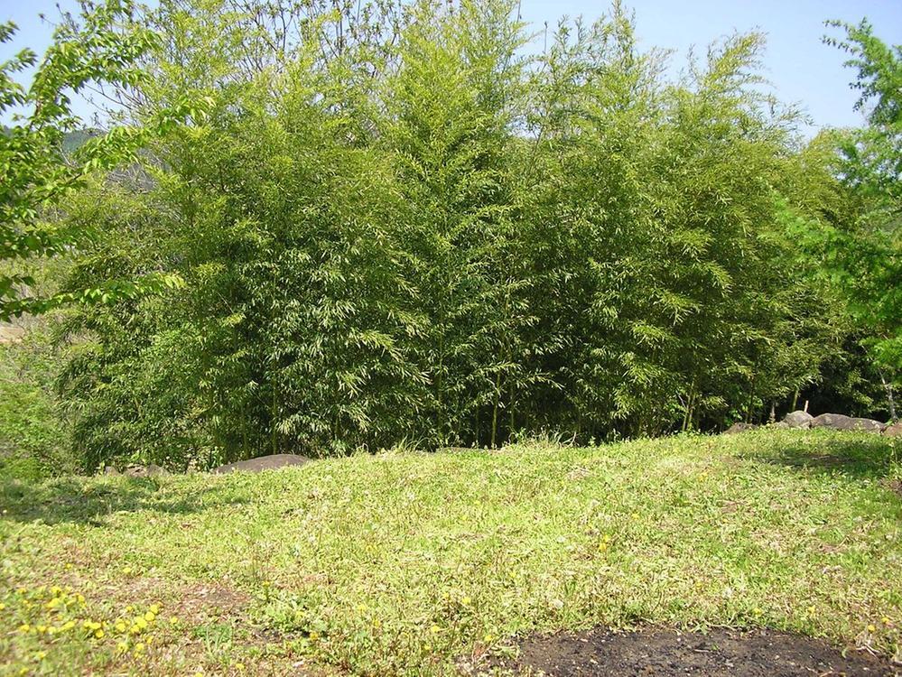 敷地内でワラビ、タケノコ、フキなど収穫できます。