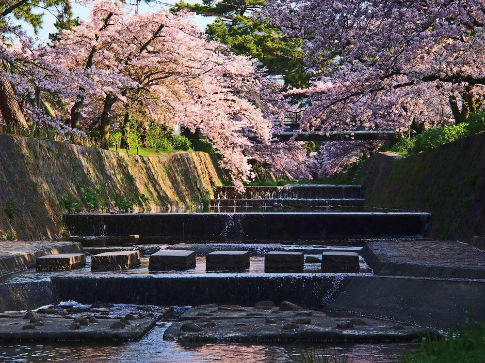 夙川公園まで1040m 。夙川駅の下を流れる夙川の河川敷は全長約4kmにわたり夙川公園として整備され、日本さくらの名所100選(1990年)に選ばれるなど、自然の美しさが魅力です