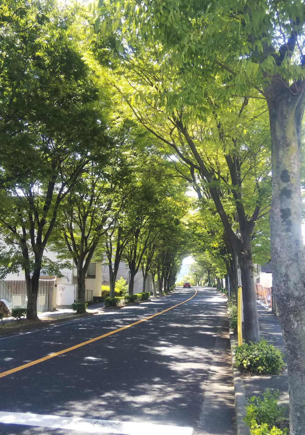宮川けやき通り。緑あふれる大通り。