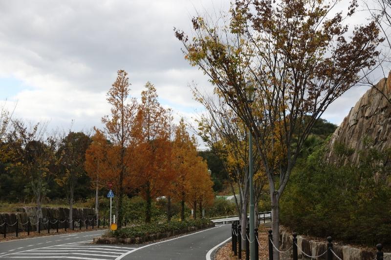 季節ごとの写真(H27.11月撮影)