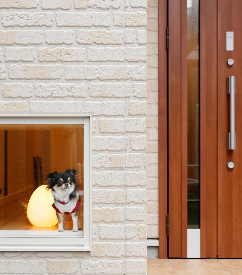 豊中で、変形地を活かしてドッグラン!ペット専用の覗き窓やカフェテラスもある、愛犬と楽しく暮らせる家画像2