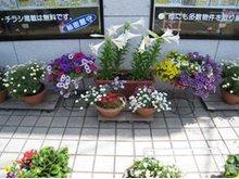 季節のお花でいつも花盛りの当店です!当店にしかない物件情報もございます!お気軽にお越しください!毎日約30件の新着物件もございます!