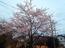 南小松(近江舞子駅) 150万円 現地からの眺望(2021年4月)撮影。お部屋からお花見が出来ます