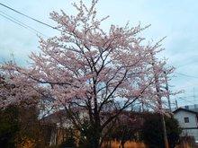 南小松(近江舞子駅) 250万円 現地からの眺望(2019年4月)撮影。お部屋からお花見が出来ます